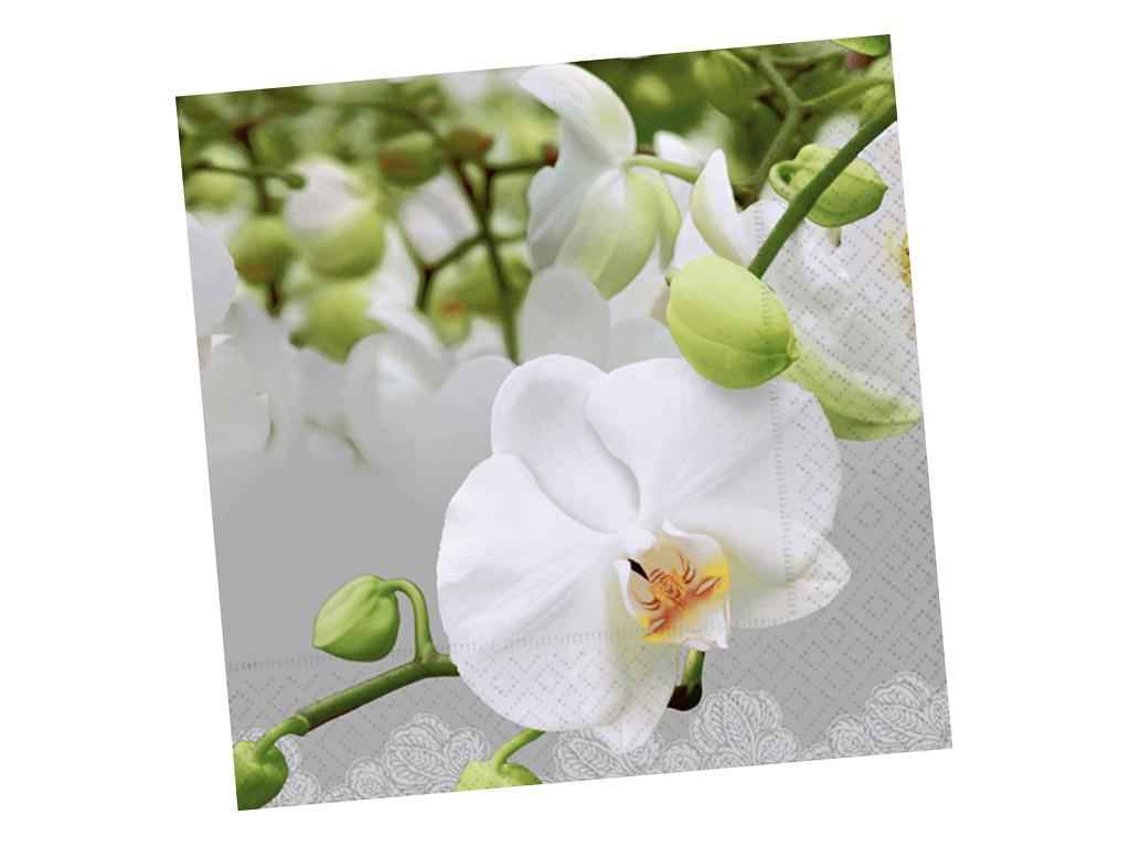 Salvetes 33x33cm 20gab. 3-slāņu Orchid Festival
